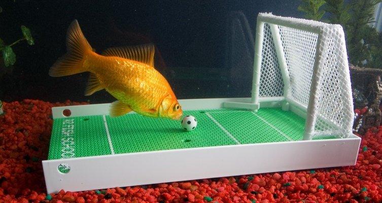 Fish Training Kit